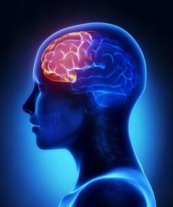 Cerveau et multitasking