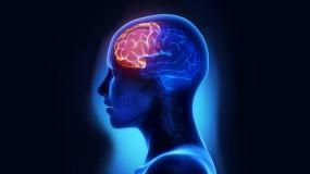 Un cerveau, deux activités, pas plus.